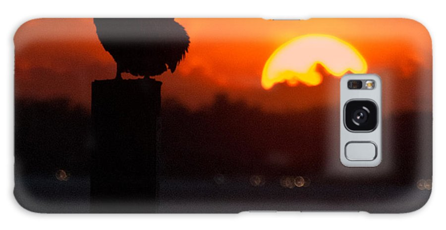 Pelican Galaxy S8 Case featuring the photograph Sunset Pelican by George Taylor
