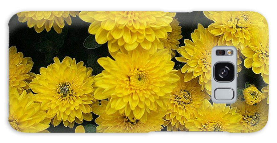 Floral Galaxy S8 Case featuring the photograph Sunshine by Jo Dawkins