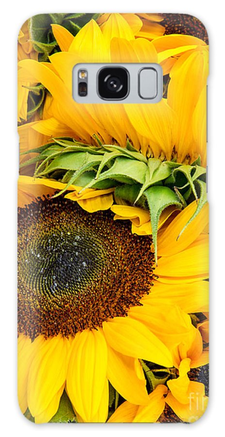 Sunflowers Galaxy S8 Case featuring the photograph Sunshine by Mary Smyth