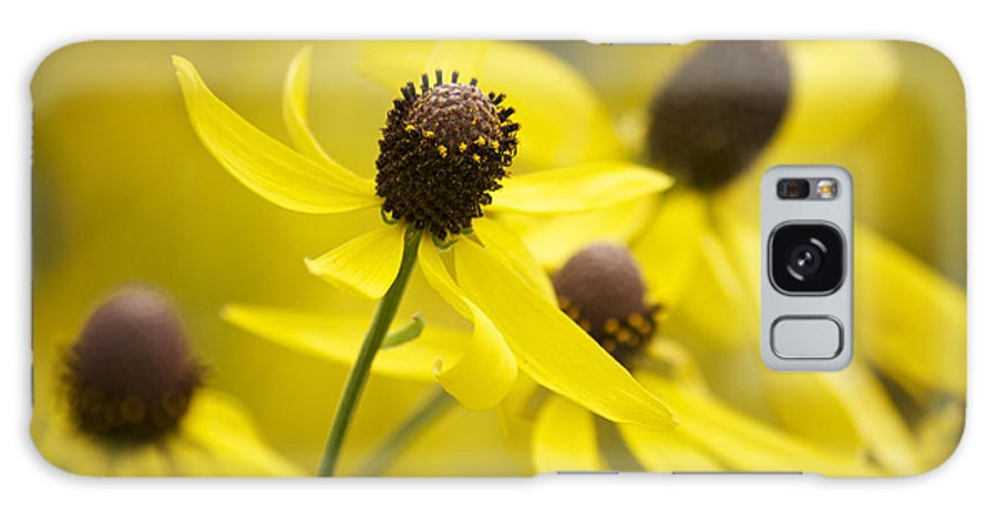 Yellow Coneflower Galaxy S8 Case featuring the photograph Sunshine On A Cloudy Day by Penny Meyers