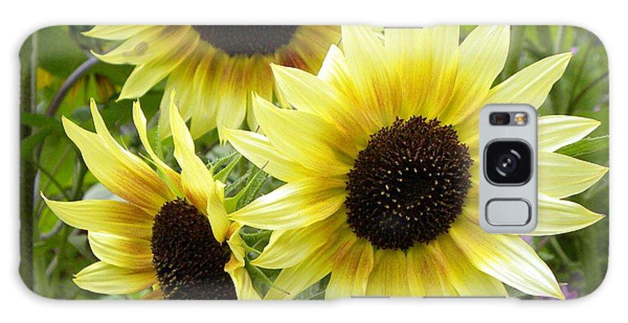 Sunflower Galaxy S8 Case featuring the photograph Sunshine Trio by Brigitte Mueller