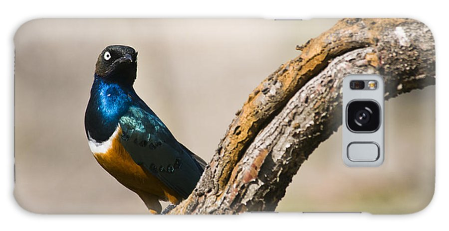 Bird Galaxy S8 Case featuring the photograph Superb Starling by Chad Davis
