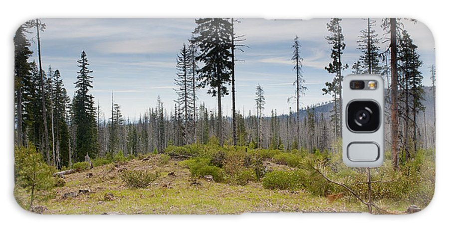 Tree Galaxy S8 Case featuring the photograph Survivors by Belinda Greb