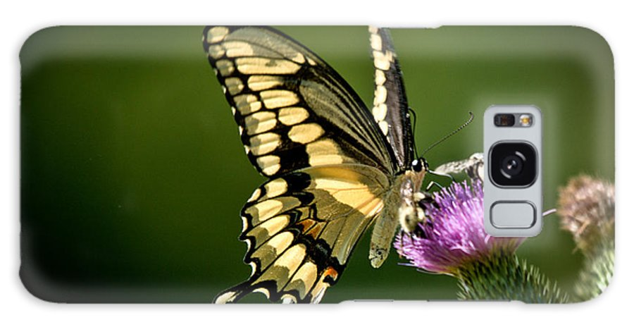 Galaxy S8 Case featuring the photograph Swallowtail And Friends by Cheryl Baxter