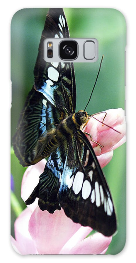 Swallowtail Galaxy S8 Case featuring the photograph Swallowtail Butterfly by Marilyn Hunt