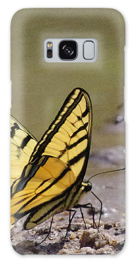 Insects Galaxy S8 Case featuring the photograph Swallowtails by Mike and Sharon Mathews