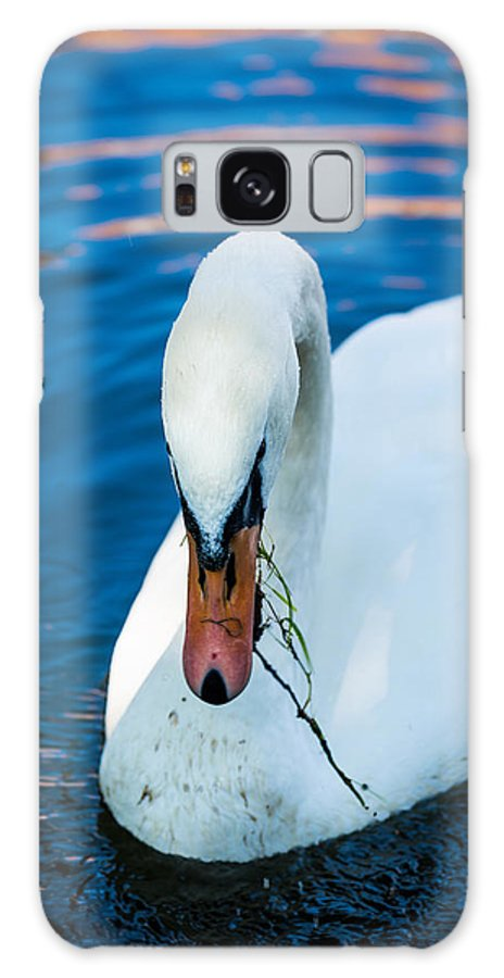 Swan Galaxy S8 Case featuring the photograph Swan 2 by Dobromir Dobrinov
