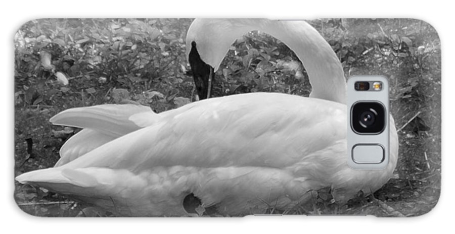Swan Galaxy S8 Case featuring the photograph Swan Nap by John Holfinger