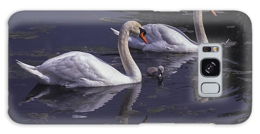 Bird Galaxy S8 Case featuring the photograph Swans And Signet by Richard Kitchen