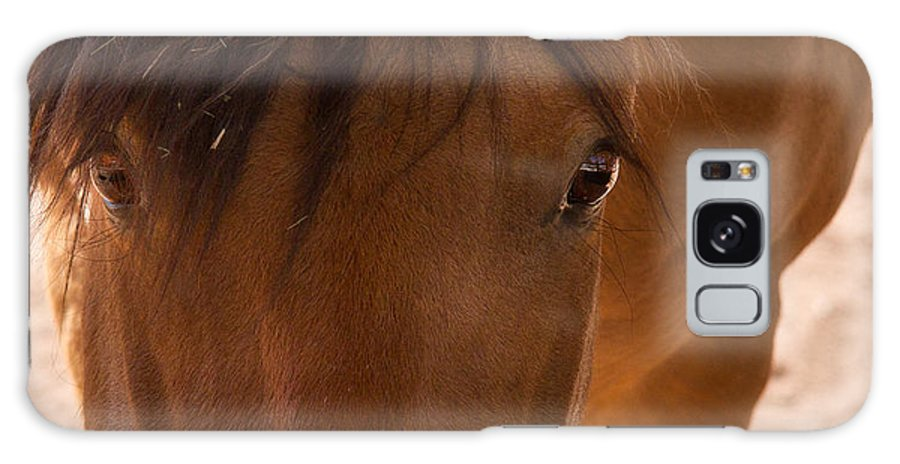 Horse Galaxy S8 Case featuring the photograph Sweet Horse Face by Natalie Rotman Cote