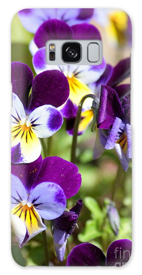 Viola Galaxy S8 Case featuring the photograph Sweet Viola by Carol Groenen