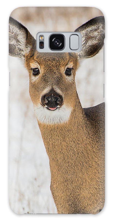 Deer Galaxy S8 Case featuring the photograph Sweet With Sass by Sheen Watkins