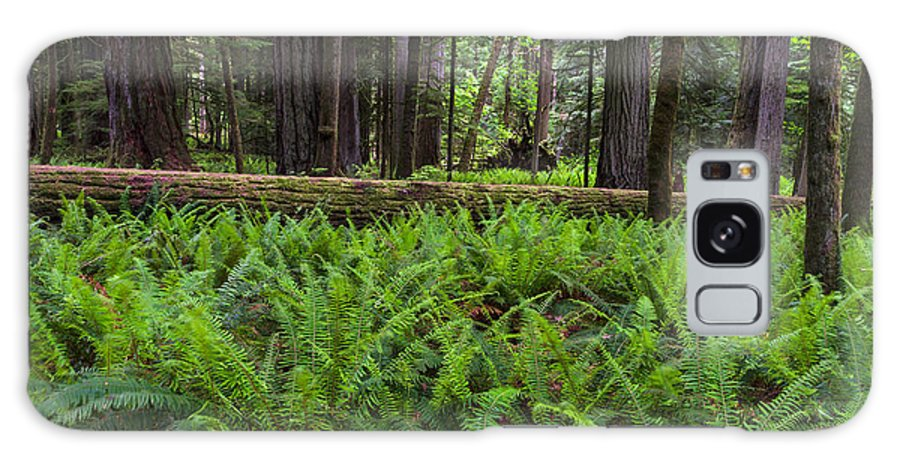 Botany Galaxy S8 Case featuring the photograph Sword Ferns In Macmillan Provincial Park by Michael Russell