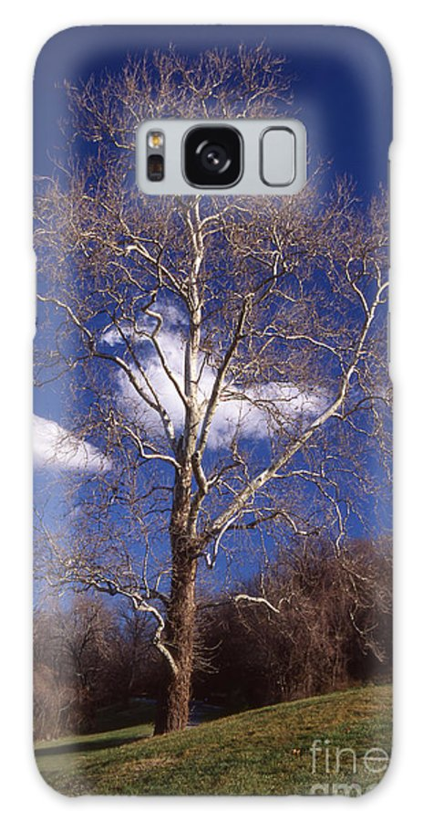 Scenic Tours Galaxy S8 Case featuring the photograph Sycamore On The Hill by Skip Willits