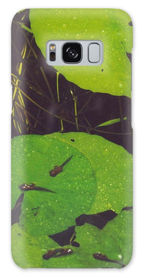 Baby Frogs On Lily Pads3.50 Galaxy S8 Case featuring the photograph Tadpoles by Robert Floyd
