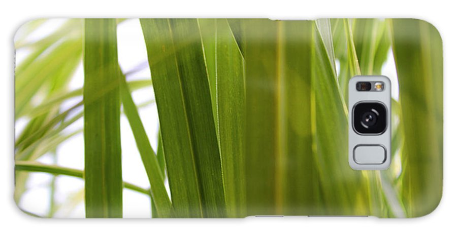 Grass Galaxy S8 Case featuring the photograph Tall Grass by Carolyn Stagger Cokley