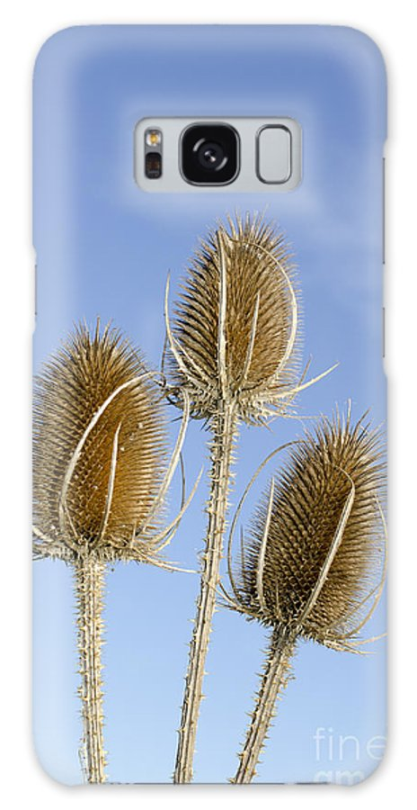 Teasel Galaxy S8 Case featuring the photograph Teasels by Steev Stamford
