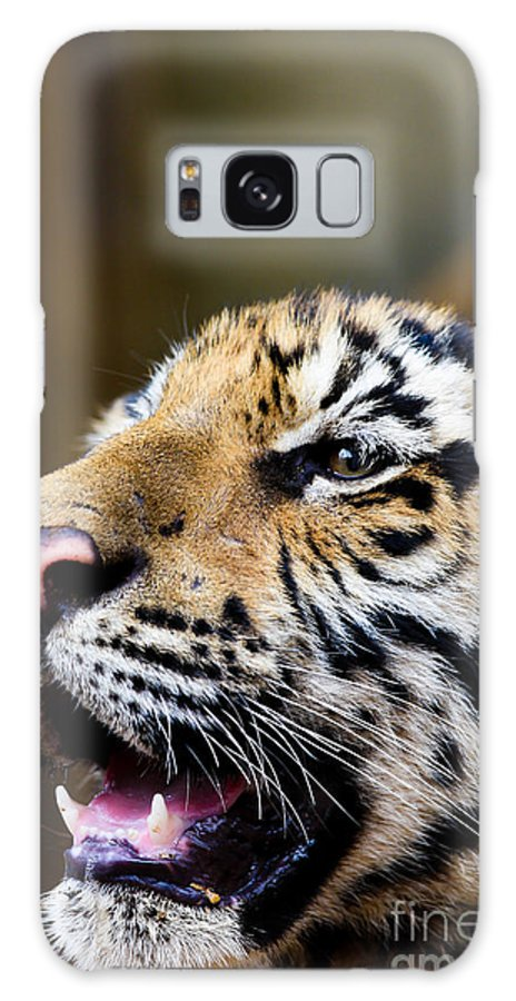Animal Galaxy S8 Case featuring the photograph Thai Bengal Tiger by Fototrav Print