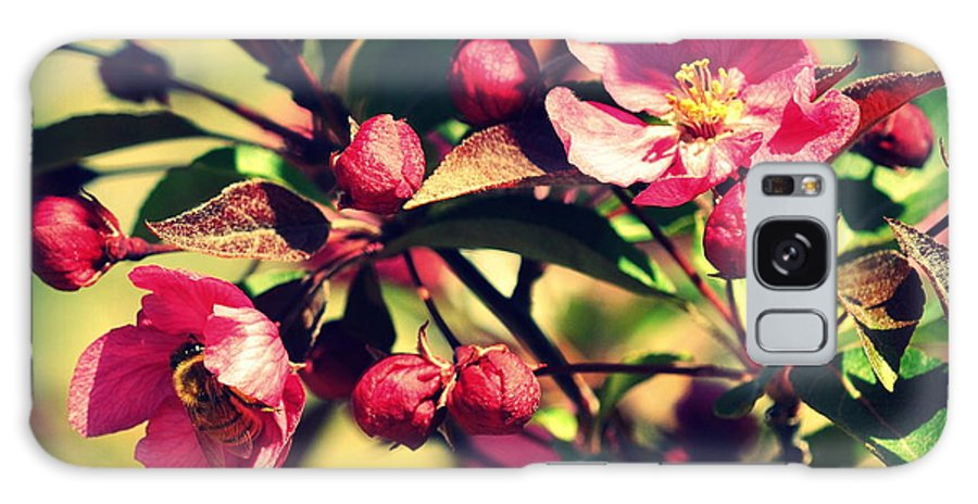 Cherry Tree Galaxy S8 Case featuring the photograph The Bee And The Blossom by Lisa Holland-Gillem