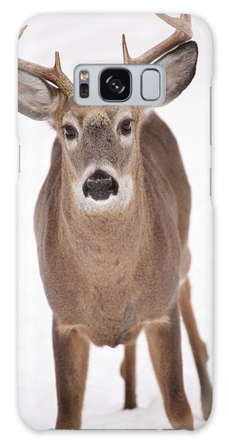 Buck Galaxy S8 Case featuring the photograph The Buck Stops Here by Karol Livote