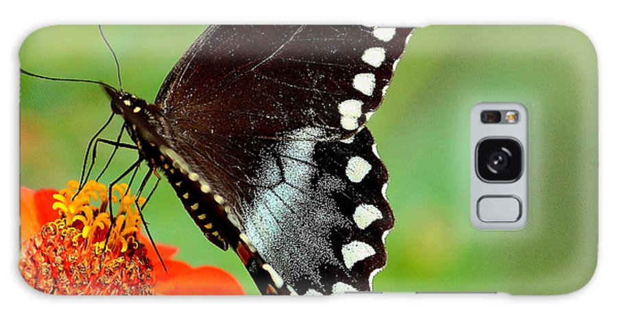 Butterfly Galaxy S8 Case featuring the photograph The Butterfly And The Zinnia by Karen Beasley