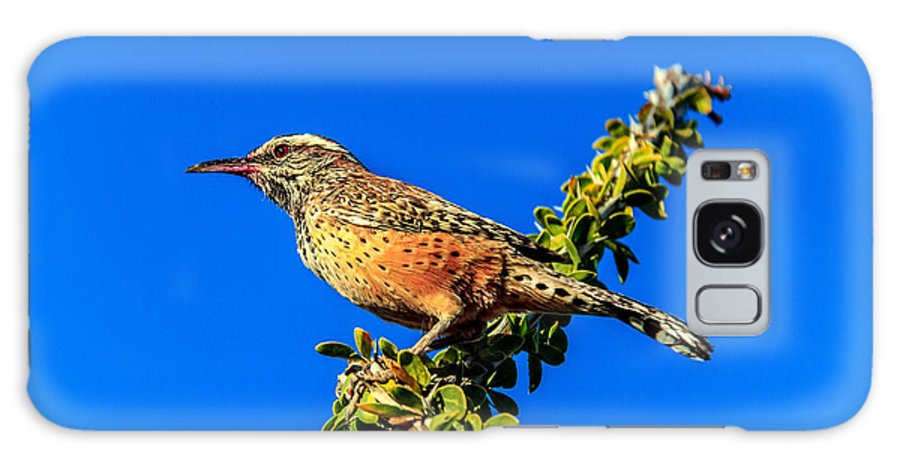 Bird Galaxy S8 Case featuring the photograph The Cactus Wren by Robert Bales