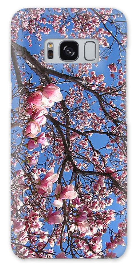 Tree Galaxy S8 Case featuring the photograph The Cherry Blossons by Shar Wolfe