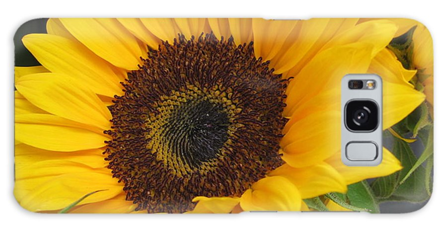 Sunflower Field Galaxy S8 Case featuring the photograph The Color Of Summer - Sunflower by Dora Sofia Caputo Photographic Design and Fine Art