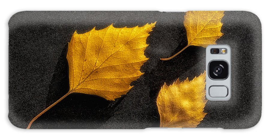 Art Galaxy S8 Case featuring the photograph The Golden Leaves by Veikko Suikkanen