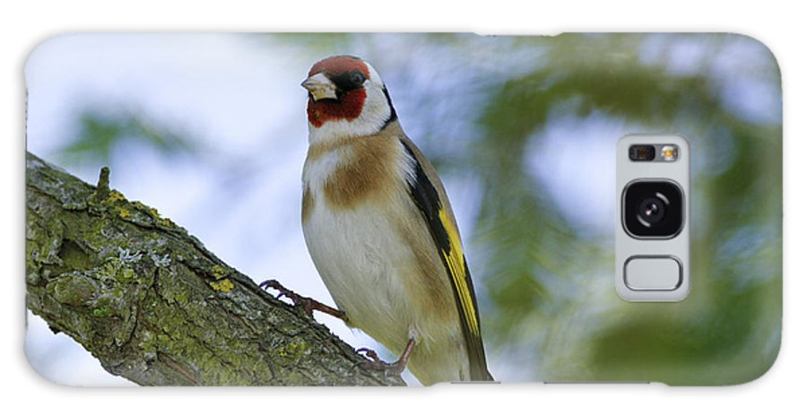 Goldfinch Galaxy S8 Case featuring the photograph The Goldfinch by Simon Gregory