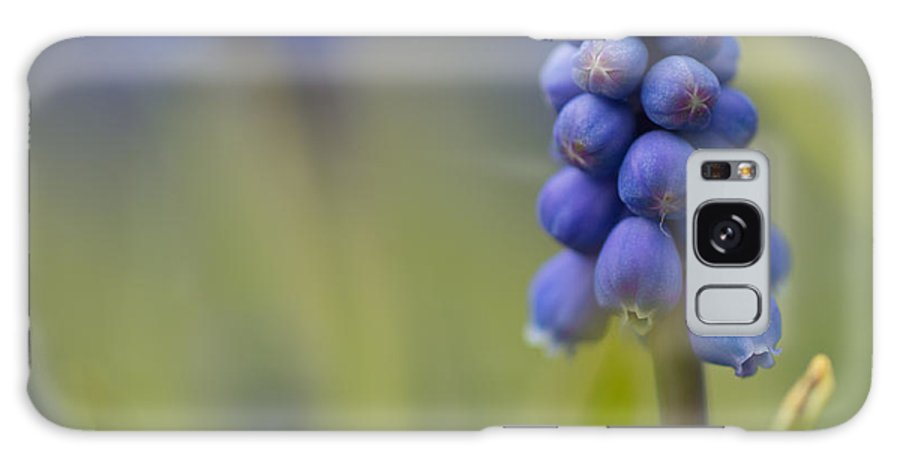 Blue Flower Galaxy S8 Case featuring the photograph The Grapes Of Wrath by Little m Photography