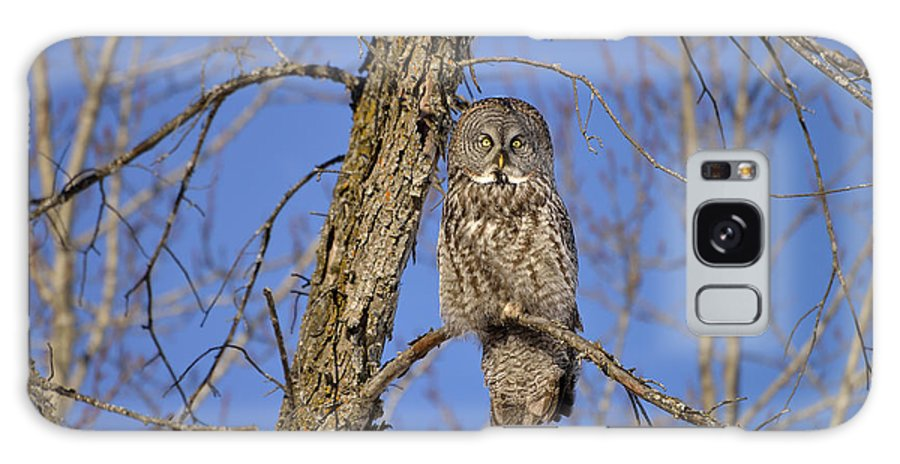 Great Grey Owl Galaxy S8 Case featuring the photograph The Great Gray by Joshua McCullough