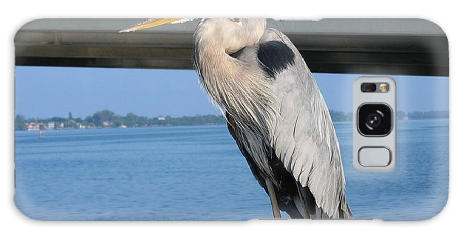 Bird Galaxy S8 Case featuring the photograph The Great Heron by Shar Wolfe