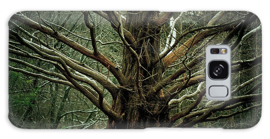 Tree Galaxy S8 Case featuring the photograph The Hobbit Tree by Mary Smyth