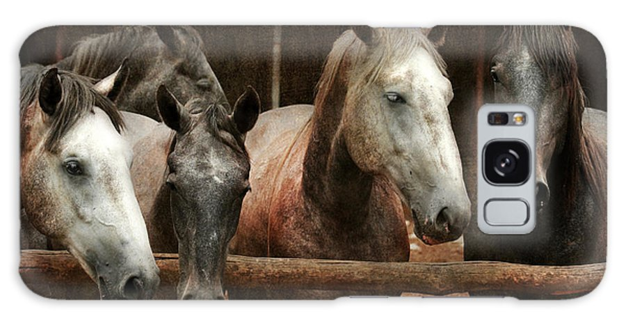 Horse Galaxy S8 Case featuring the photograph The Horses by Angel Ciesniarska