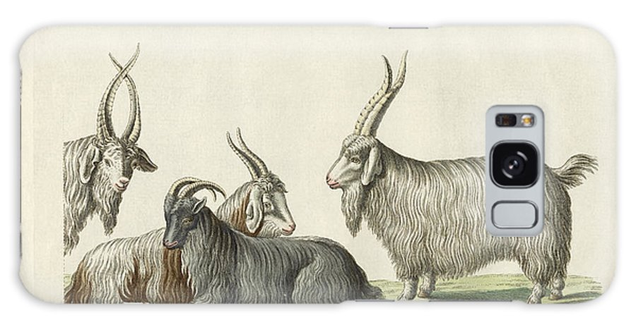 Bertuch Galaxy S8 Case featuring the drawing The Kashmir Goats Introduced In France by Splendid Art Prints