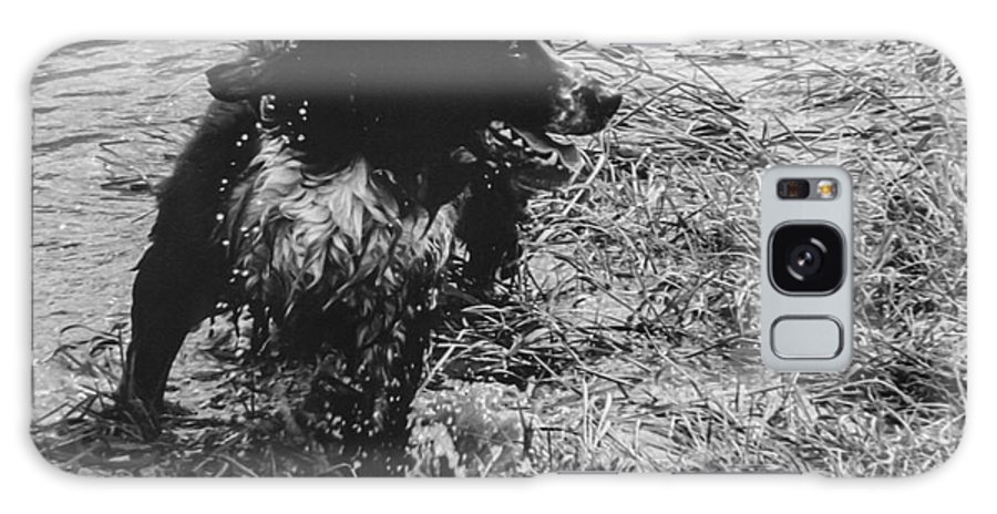 Dog Galaxy S8 Case featuring the photograph The Laughing Springer by Kathryn Bell