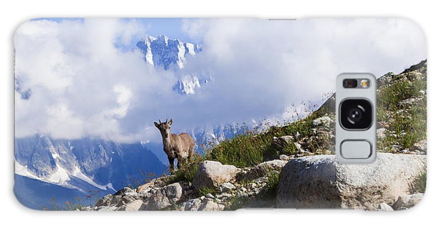 Alpine Ibex Galaxy S8 Case featuring the photograph The Little Ibex by Mircea Costina Photography