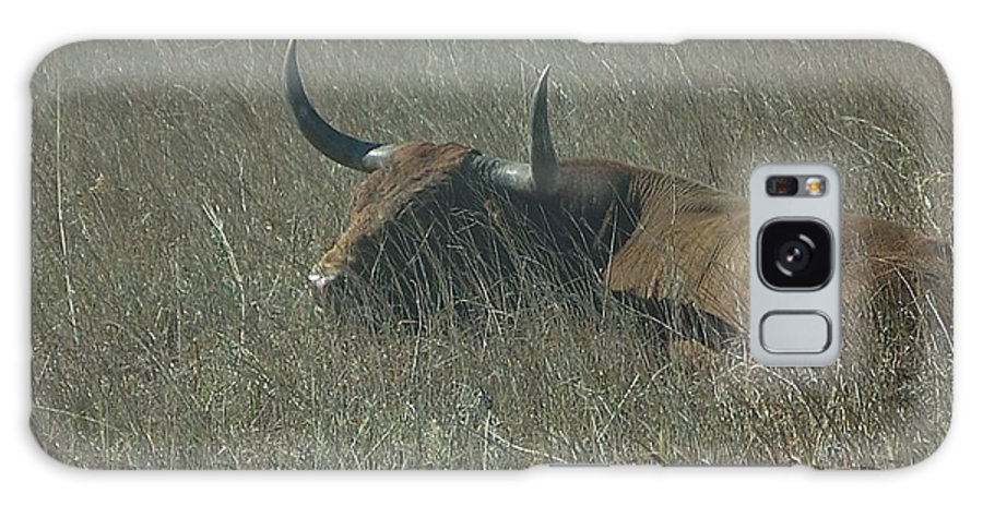 Longhorn Cattle Galaxy S8 Case featuring the photograph The Longhorn by Alan Lakin