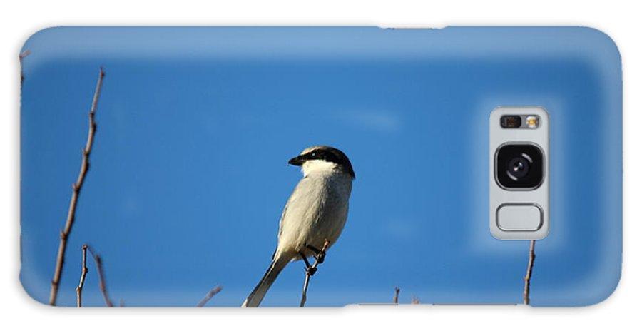 Reid Callaway The Predator Lookout Galaxy S8 Case featuring the photograph The Predator Lookout Shrike Bird Art by Reid Callaway