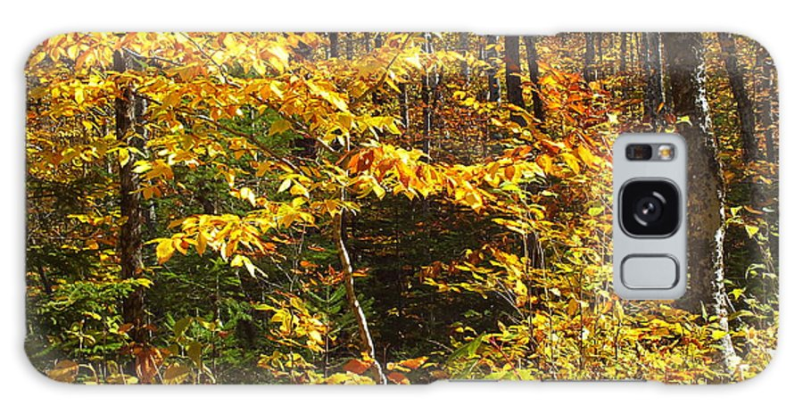New England Galaxy S8 Case featuring the photograph The Maine Woods by Gene Cyr
