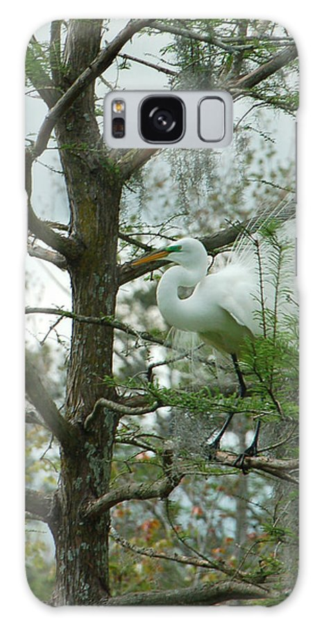 Egret Galaxy Case featuring the photograph The Mating Dance by Suzanne Gaff