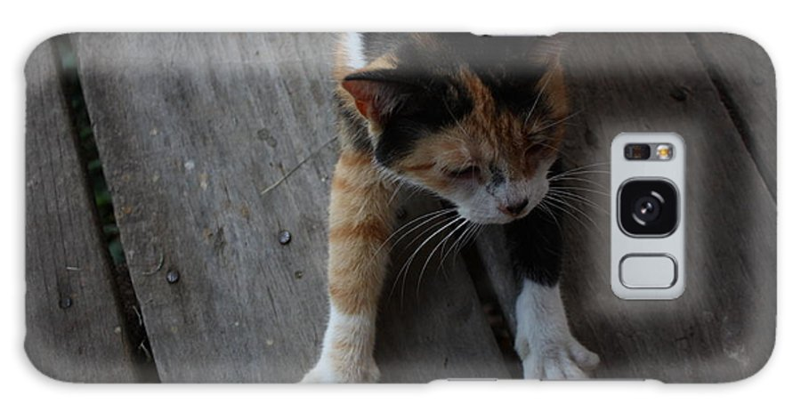 Calico Cat Galaxy S8 Case featuring the photograph The Morning Stretch by Josh Brown