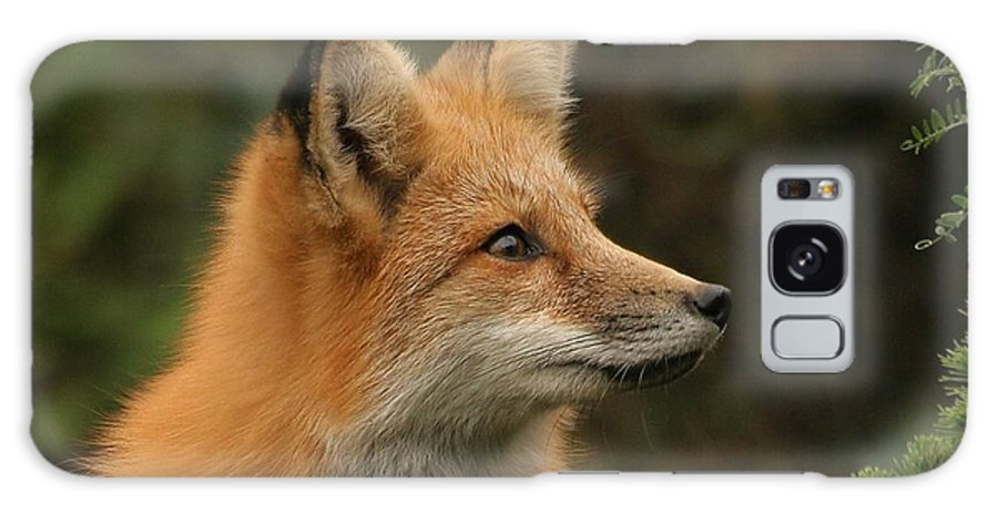 Fox Galaxy S8 Case featuring the photograph The Stare by Doris Potter