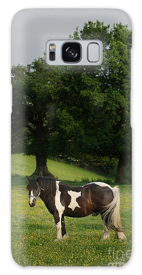 Horse Galaxy S8 Case featuring the photograph The Sunny Meadow by Angel Ciesniarska
