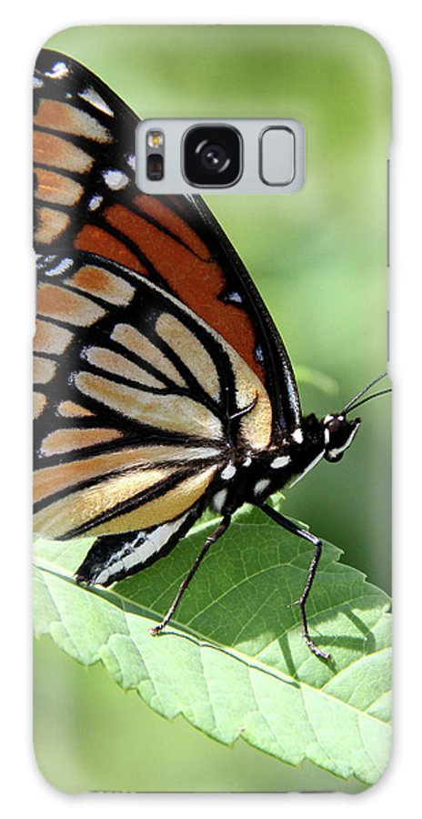 Viceroy Butterfly Galaxy S8 Case featuring the photograph The Viceroy by Doris Potter