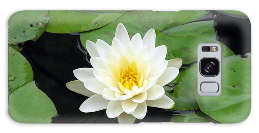 Water Lilies Galaxy S8 Case featuring the photograph The Water Lilies Collection - 01 by Pamela Critchlow