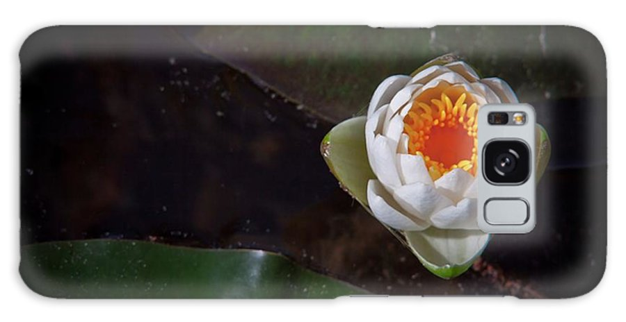 Water Lily Galaxy S8 Case featuring the digital art The Water Lily by Linda Unger