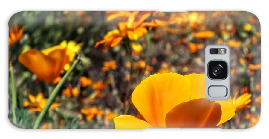 Desert Southwest Galaxy S8 Case featuring the photograph The Wildflowers Are Here And Spring Has Arrived by Lucinda Walter