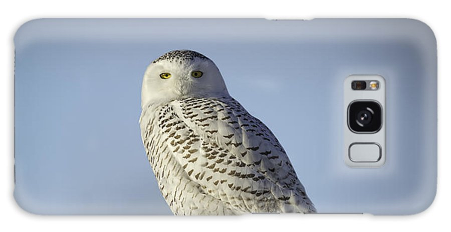 Snowy Owl (bubo Scandiacus) Galaxy S8 Case featuring the photograph The Wise Snowy Owl by Thomas Young